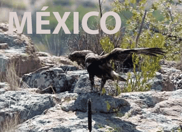 mexico_365